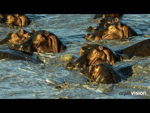 South Luangwa National Park - Zambian Tourism
