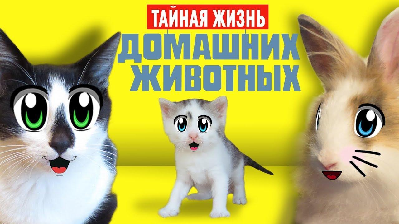 ТАЙНАЯ ЖИЗНЬ ДОМАШНИХ ЖИВОТНЫХ 2! Кот Малыш и Кошка МУРКА ОДНИ ДОМА как МУЛЬТИК Secret Life of Pets   Ютуб Домашние Животные Смешные Видео