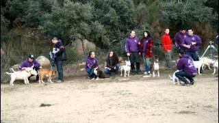 Club Madrid Bull Terrier En Bestcan