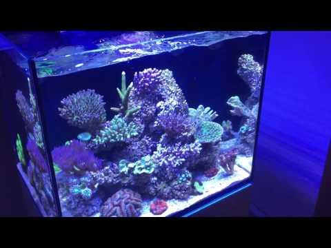 Pet Supplies Hospitable Seachem 459 Flourish Excel 4 Liter Cleaning & Maintenance
