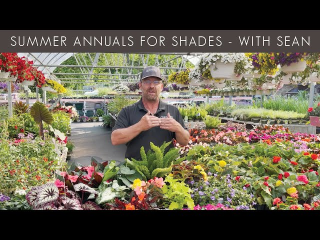 5/27/2021 Summer Annuals for Shade with Sean