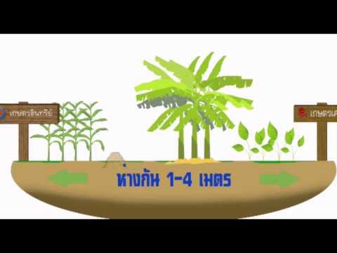มาตรฐานเกษตรอินทรีย์ Organic Agriculture Standard
