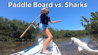 Paddle Board Shark Fishing!
