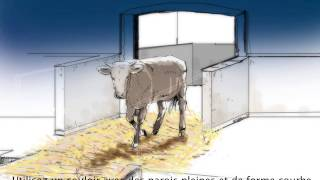 Bonnes et Meilleures Pratiques pour le Transport des bétail
