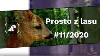 Prosto z lasu - 11 2020