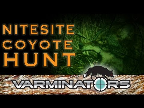 Night Vision Coyote Hunting with the NiteSite NS200