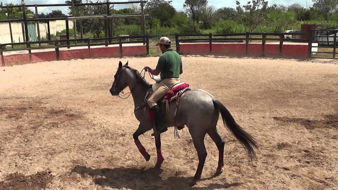 Equino: Diferencias De La Doble Rienda Y Rienda Charra