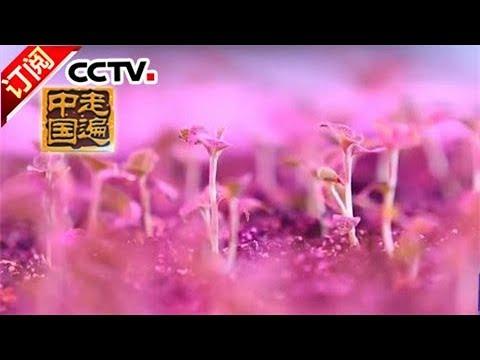 《走遍中国》 20170925 了不起的植物工厂 | CCTV-4