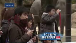「トラが逃げた!」と想定した訓練がきょう、上野動物園で行われました...