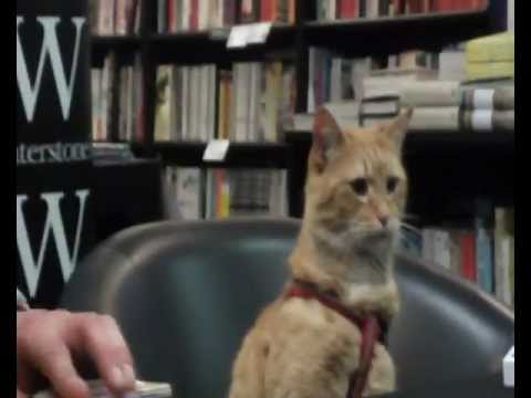 James Bowen and Bob the Cat at Waterstones on High Street Kensington