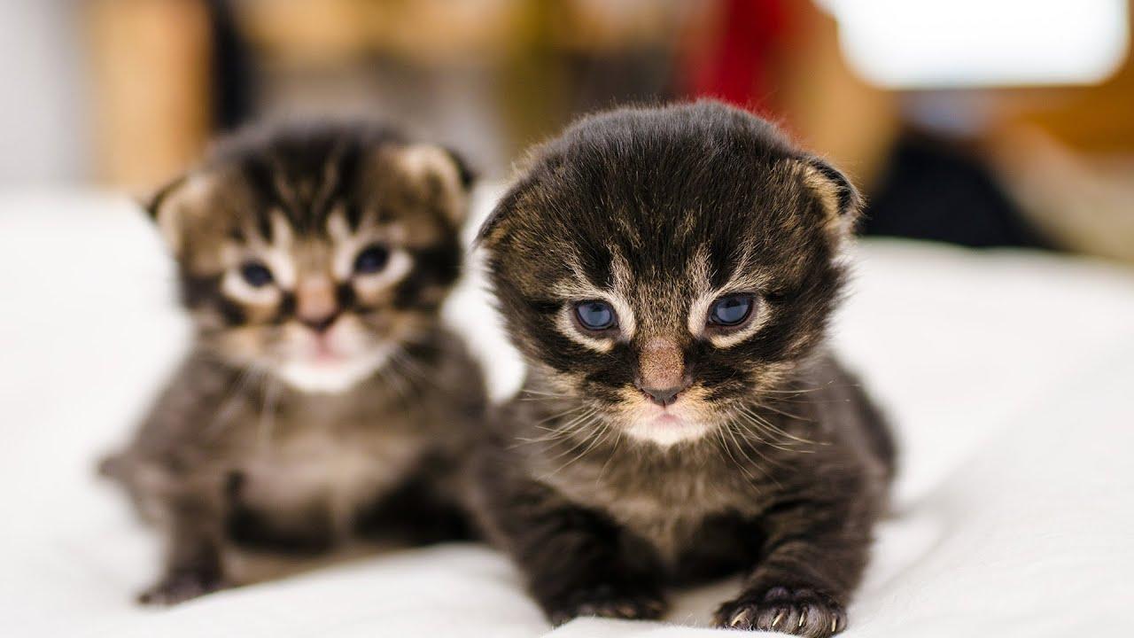 angry wet kitten - HD1920×1080