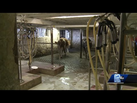 Hollywood actor takes on dairy farms