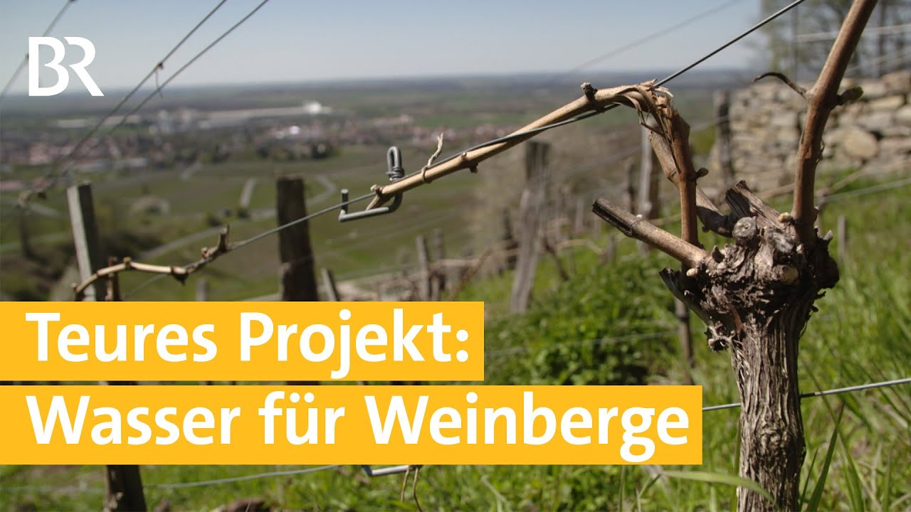 Kampf gegen Trockenheit - Projekt zur Weinbergbewässerung  | Unser Land | BR