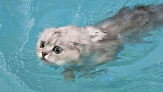 Funny Cats in Water Compilation 2015