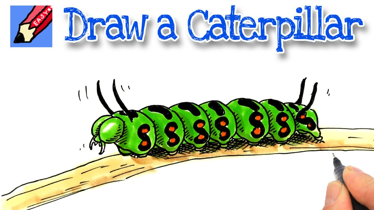 How To Draw A Caterpillar Youtube