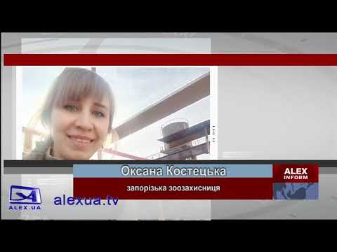 Телеканал ALEX UA - Новости: Запорізькі волонтери спільно з рятувальниками витягли собаку з водяної пастки