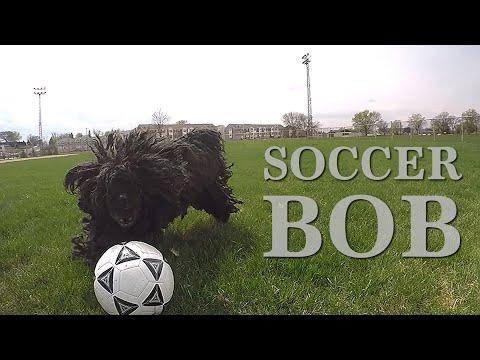 Hungarian Puli • Soccer Bob