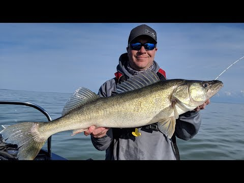 MEGA Walleyes On Lake Erie - In-Depth Outdoors TV Season 13, Episode 22