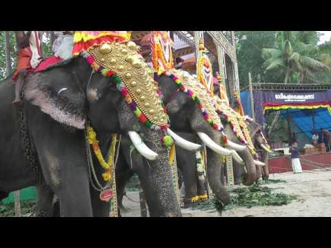 Elephants at a local Hindu Festival, Kerala