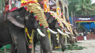 Elephants at a local Hindu Festival, Kerala