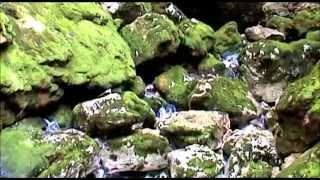 Izvir potoka Lijak