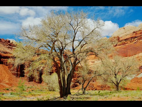 Capitol Reef National Park, National Park in Utah, United States