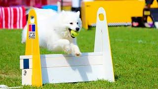 Собачьи соревнования. Кто выпустил собак? / WHO LET THE DOGS OUT? (Дай Лапу!)