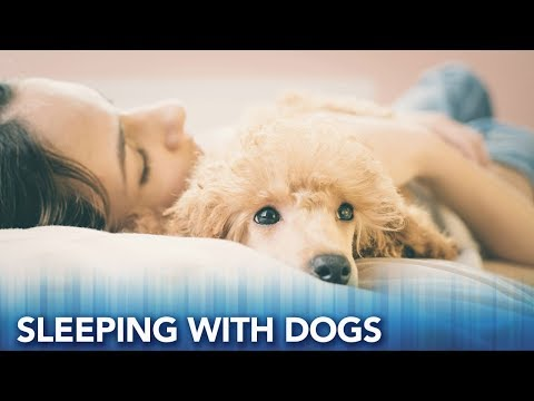 Study: Women sleep better with dogs by their side