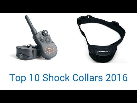 10 Best Shock Collars 2016