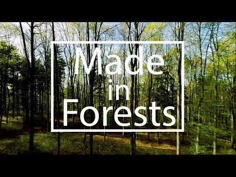 """""""Made in Forests""""  -  a short story about sustainable fashion with Michelle Yeoh"""