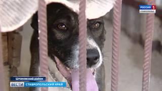 В плену у собаки. Ставропольчанин попал в лапы незнакомого пса