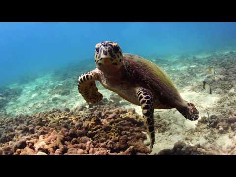 Freediving with turtle in Pigeon island