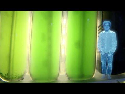 La lumière pour les biocarburants