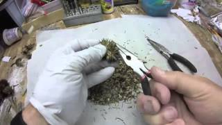 Echinacea Seed Removal
