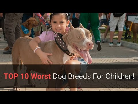 Worst Dogs  TOP 10 Worst Dog Breeds For Children!