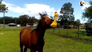 Funny Horse Plays With Squeaky Toy | The Dodo