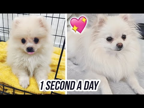 Watch My Puppy Grow: 1 Second A Day thumbnail