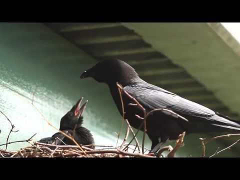 Crow's Nest - Promo