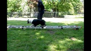 Canine Concept Focus Classes Teach Balance And Rear End Awareness Training