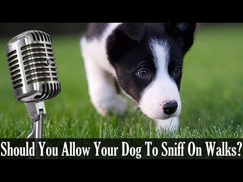 should-you-allow-your-dog-to-sniff-on-walks---dog-training-podcast