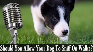 Should You Allow Your Dog To Sniff On Walks - Dog Training Podcast