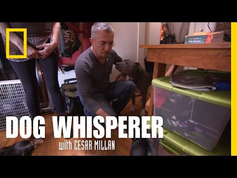Calming Presence | Dog Whisperer
