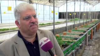"""مهندس بحريني ينشئ مشروع زراعي.. """"في الماء"""""""