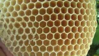 Колодное пчеловодство. Часть 7. Почему исчезают пчелы. ПРП Счастливое, Молдова.