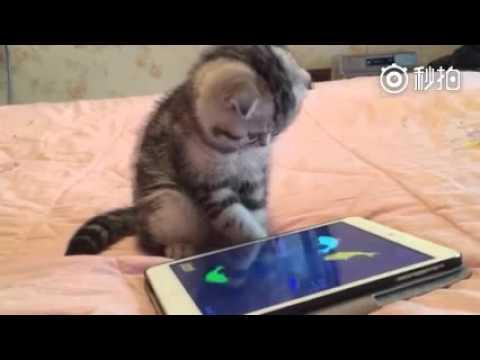 Кот из телефона смотреть онлайн