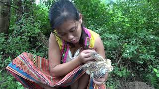 Primitive Life: Primitive Girl's Rescue And Breeding Chicken - Lazy Guy Cooking Chicken For Food