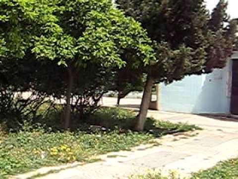 9hab maroc 2013 choha hibatubecom - 2 6