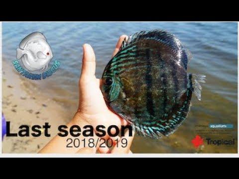 Last Season In Amazon / Santarem Discus