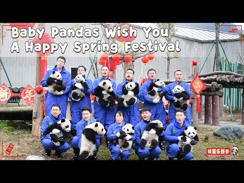 Baby Pandas Wish You A Happy Spring Festival | iPanda