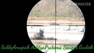 55 M masih rapet hunting blibis 13-03-2018